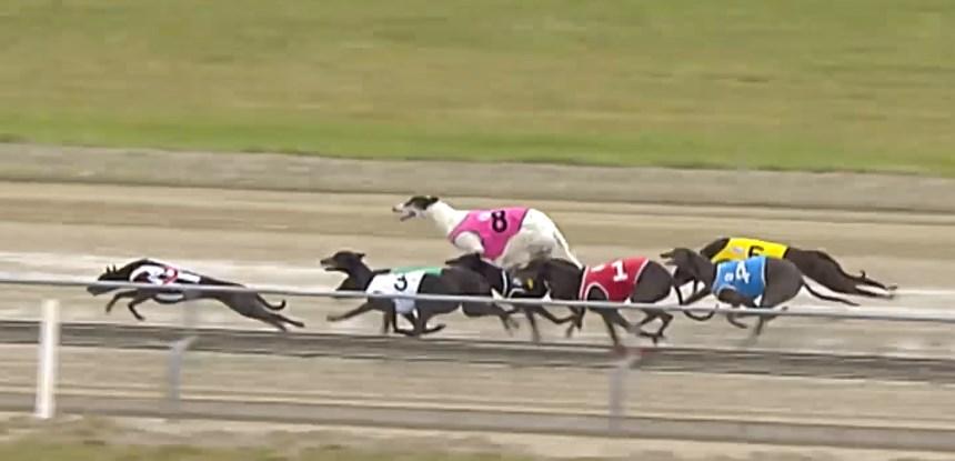 Christchurch Greyhound Racing Club Guide